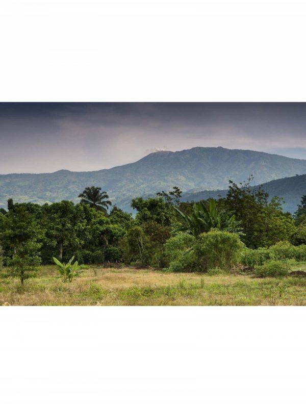 Plantation Costa Rica, Chocolats Geneviève Grandbois